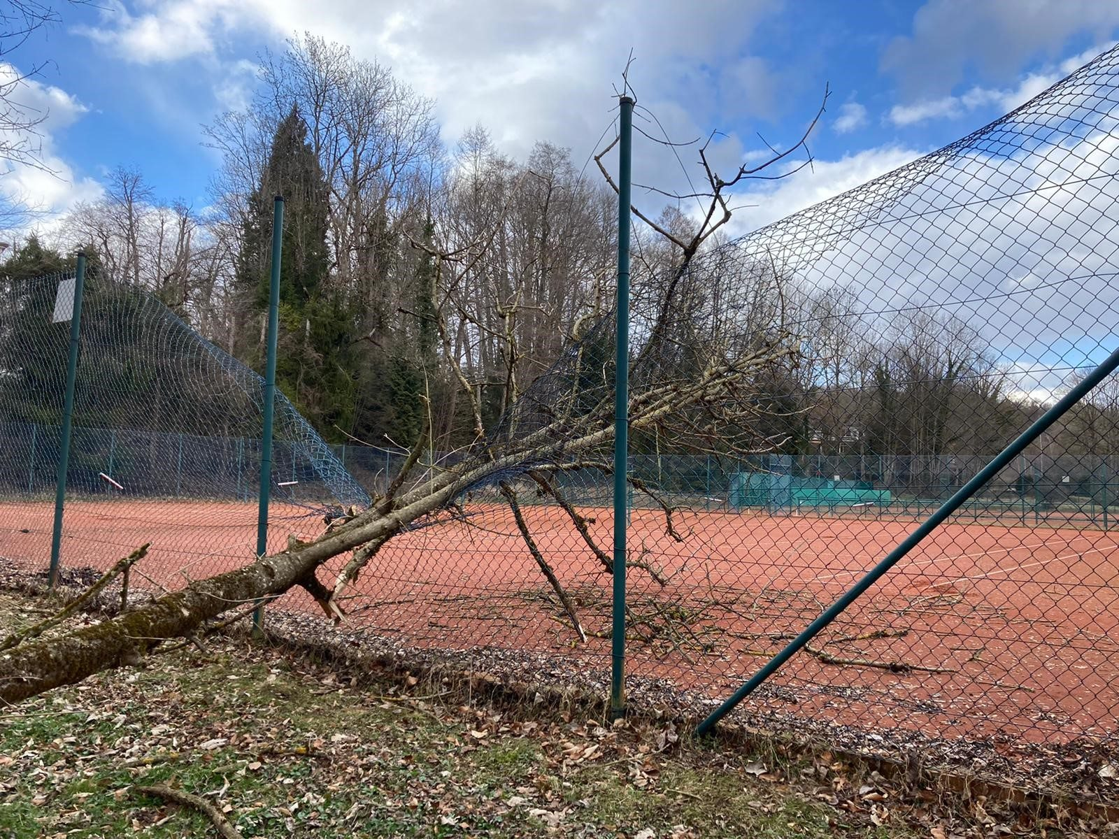 Tennis Zaun 2021